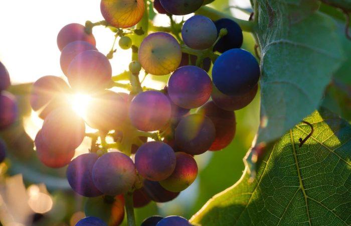 Qu'est-ce qu'un vin naturel ?
